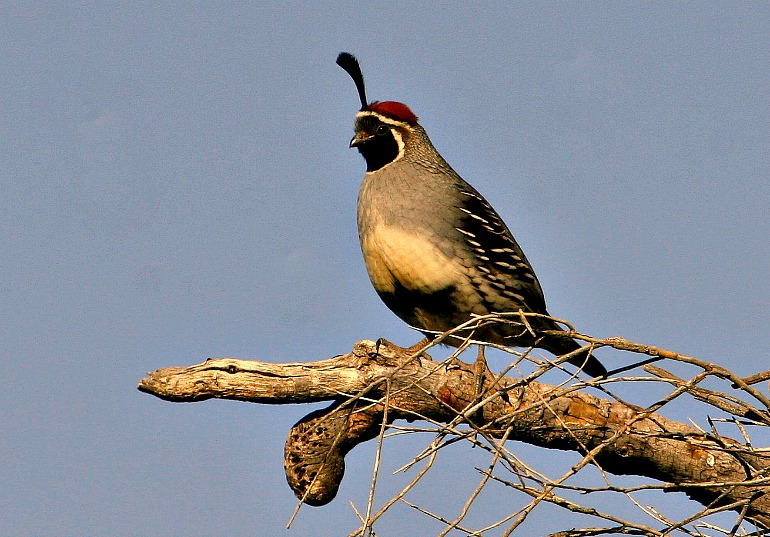 Birding Arizona's Sonoran Winter Vacation Destinations