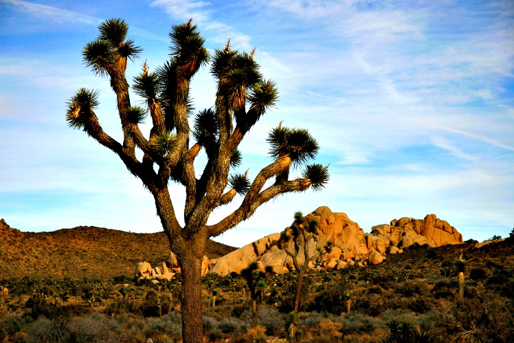 Joshua Tree: Admire Two Deserts At Once