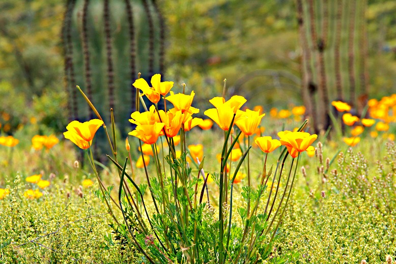 Picacho Peak State Park Is Alive With Color