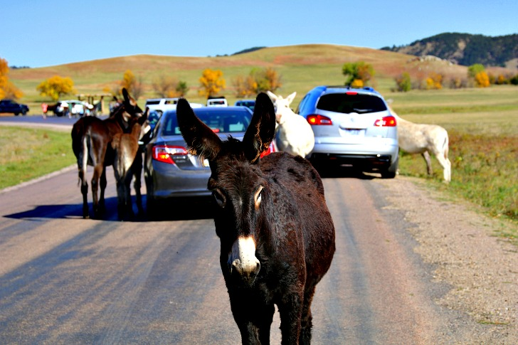 Explore the Black Hills