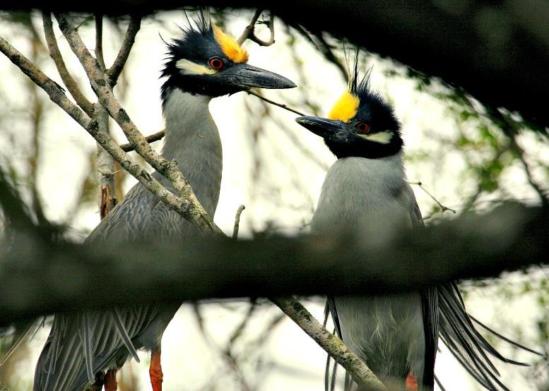 What Is Birding?