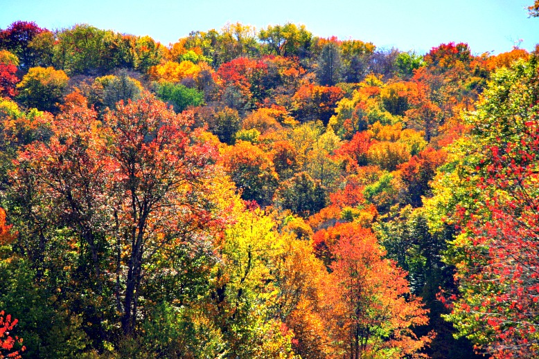 Fantastic Fall Foliage…and Where to Find It