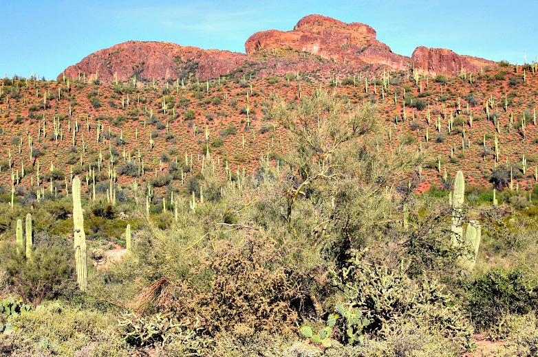 A Lifetime Is Not Enough To Do It All: 6 Arizona Destinations for Winter Fun