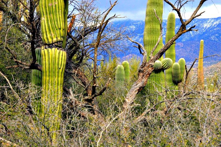 Catalina State Park: Sky Island Gem