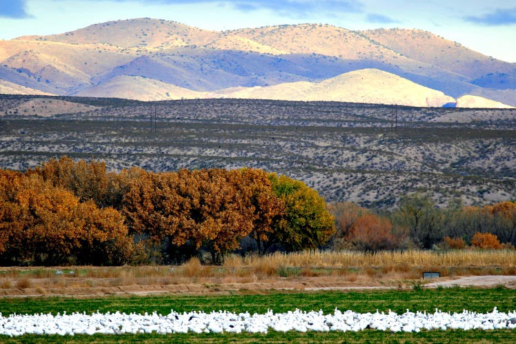 The Mind-Blowing Enchantment of New Mexico: San Antonio & Bosque del Apache