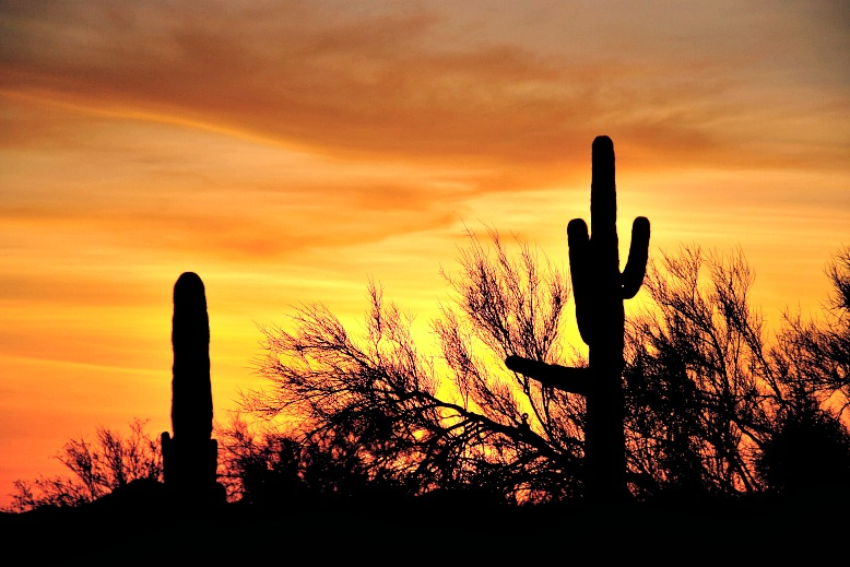 Everything You Need to See and Do on an Arizona Road Trip