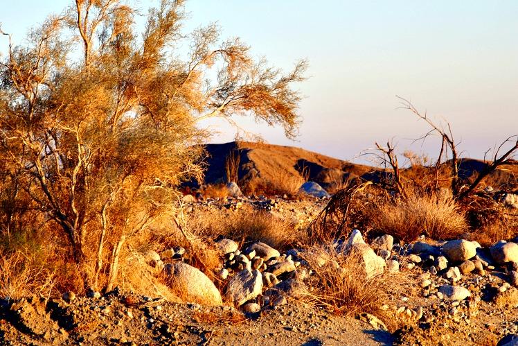 Desert Solitude: Anza-Borrego Desert State Park