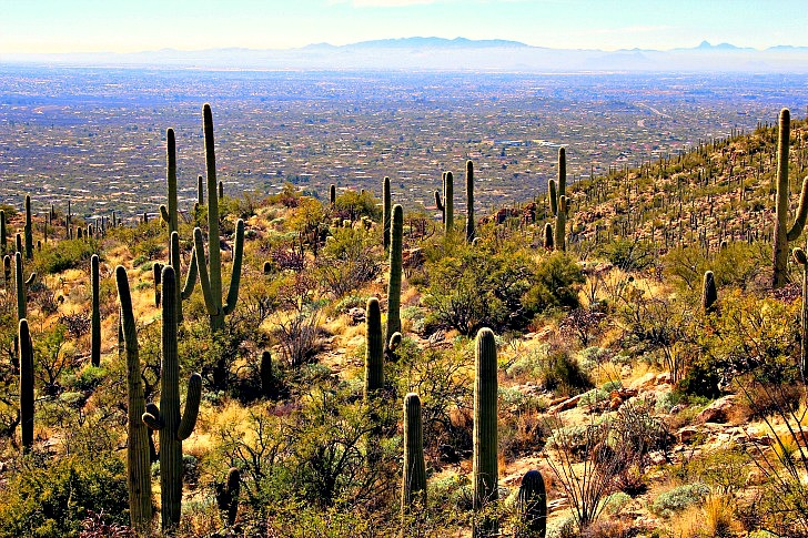 Explore Tucson Naturally