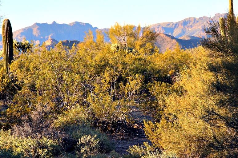Benefits of Nature: Exploring Lost Dutchman State Park & Tonto National Forest