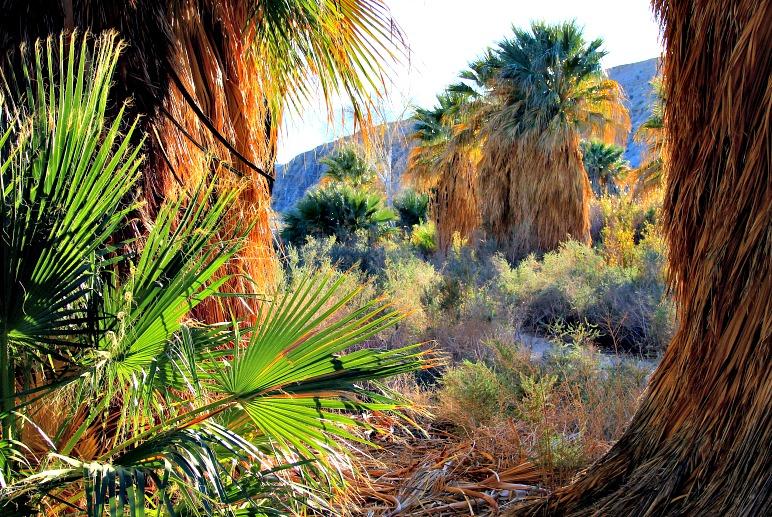 Coachella Valley Preserve: A Desert Oasis