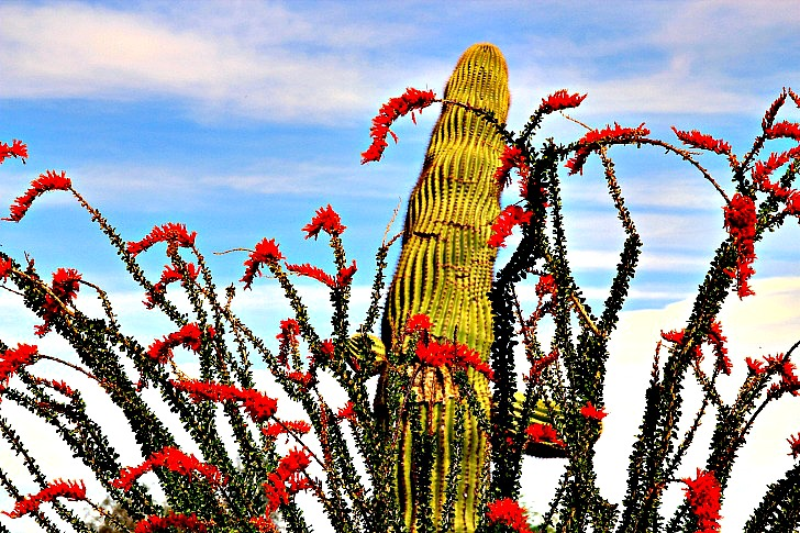 What Makes Arizona Such a Hotspot for Snowbirds?