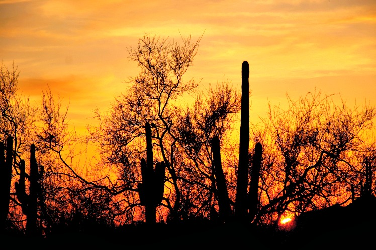 Where It All Began: My Love Affair with the Southwest