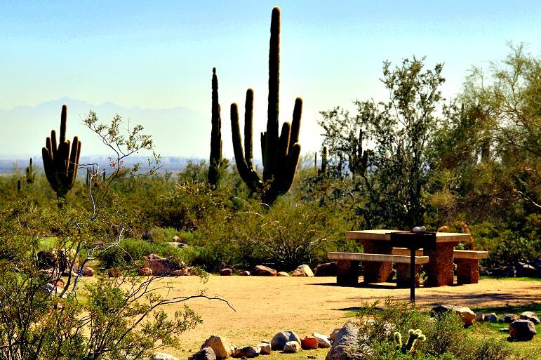 Pristine Sonoran Desert Camping
