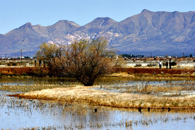 Southeast Arizona Birding Hotspot: Whitewater Draw Wildlife Area