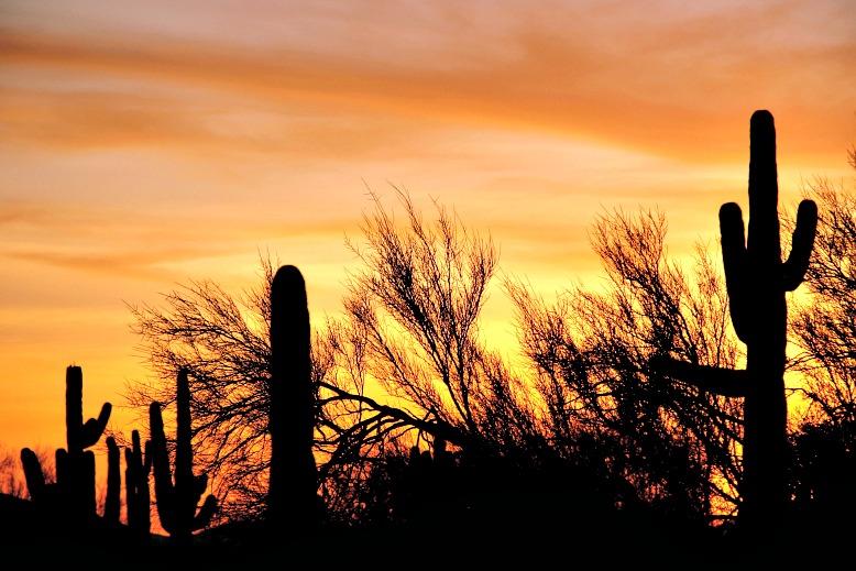 Saguaro-speckled Desertscapes of Cave Creek Regional Park
