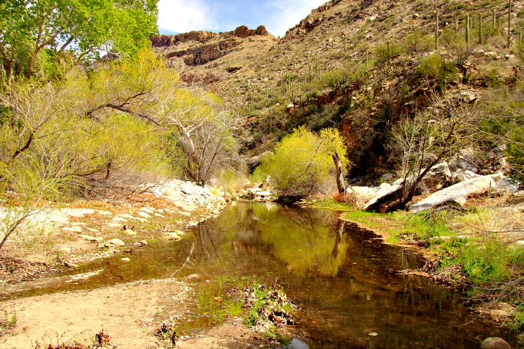 Ribbon of Green: Sabino Canyon Offers Desert Beauty