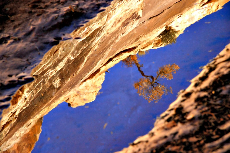 Sculpted By Water: Natural Bridges National Monument