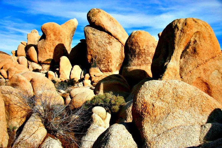 National Park Programs that Enhance Your Visit