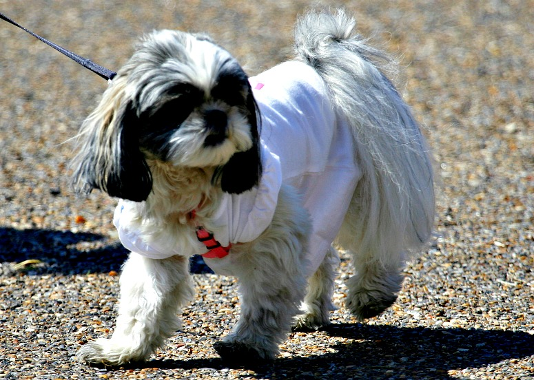 Camping Travel Tips for Pet Owners