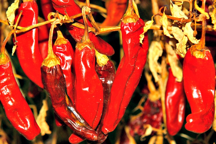 The Ultimate Guide to Hatch Chile Peppers