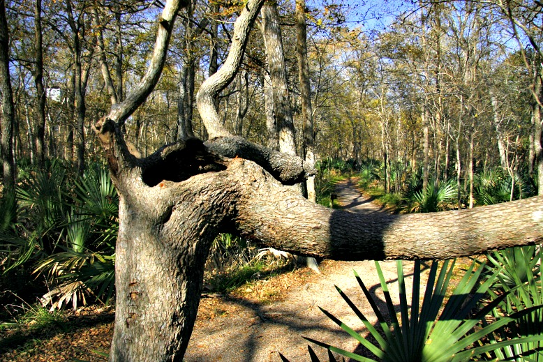 Palmetto State Park: Nature-filled Getaway in Central Texas