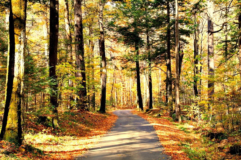 The Ultimate Guide to Great Smoky Mountains National Park