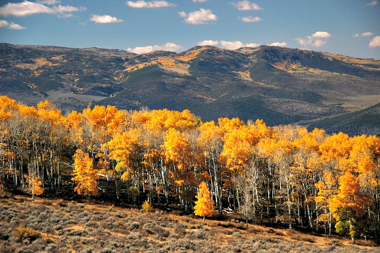 The 10 Most Breathtaking National Forests in America
