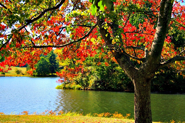8 of the Best Leaf-Peeping Destinations! But is it the Season of Fall or Autumn?